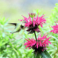 Butterfly Garden 5 by Keith Conrey