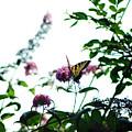 Butterfly Garden by Coralyn Klubnick Simone