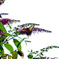 Butterfly Garden II by Coralyn Klubnick Simone