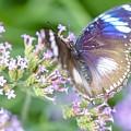 Butterfly Garden by Janice Noto
