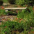 Butterfly Garden by Peg Urban