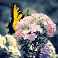 Butterfly Garden by Teresa Self