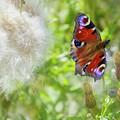 Butterfly by Hans Erik Nielsen