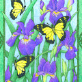 Butterfly Idyll-irises by Alison Stein