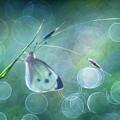 Butterfly Imagination by Petar Sabol