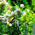 Butterfly In A Garden by Teresa Self