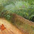 Butterfly In A Small Zen Sand Garden by Nancy Lee Moran