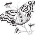 Butterfly In Black And White by Jayne Somogy
