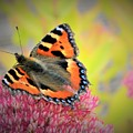 Butterfly In Bloom by MichealAnthony