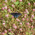 Butterfly In Clover by Suzanne Leonard