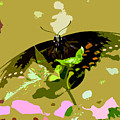 Butterfly In Color by David Lee Thompson
