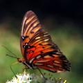 Butterfly In Orton by Dottie Dees