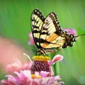 Butterfly In Summer by Bill Cannon