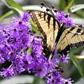 Butterfly In Summer by George Ferrell