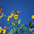 Butterfly In The Sonoran Desert Musuem by Donna Greene