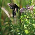 Butterfly In The Sun by Captain Debbie Ritter