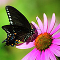 Butterfly In The Sun by Christina Rollo