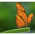 Butterfly by Jan De Graaf