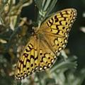 Butterfly  by Jeff Swan