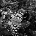 Butterfly by Jeffrey Miller