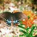 Butterfly by John Myers