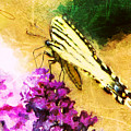 Butterfly Journey by Tina  LeCour