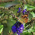 Butterfly Joy by JAMART Photography