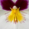 Butterfly by Karen Ulvestad