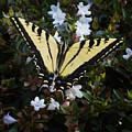 Butterfly by Kelley King