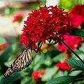 Butterfly Kiss by Michiale Schneider