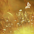 Butterfly Kiss by Torie Tiffany