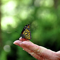 Butterfly Kisses by Diamond Bitzer