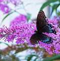 Butterfly Kisses by JAMART Photography