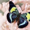 Butterfly Kisses by Janet Fikar
