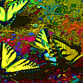 Butterfly Kisses by Keri West