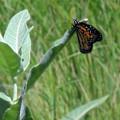 Butterfly by Lara Ekdahl
