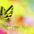Butterfly Love by Ches Black