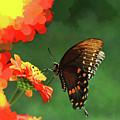 Butterfly Marmalade  by Ola Allen