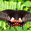 Butterfly Maze by Jean Haynes