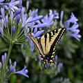 Butterfly by Melanie Rainey