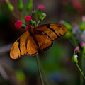 Butterfly by Michael Herb