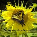 Butterfly Monarch Ba by Dean Frick