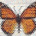 Butterfly Mosaic by Paul Van Scott