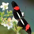 Butterfly No5 by Sam Davis Johnson