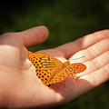 Butterfly On A Childs Hand by Stefan Rotter