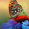 Butterfly On A Flower by Susanna Katherine