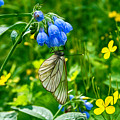 Butterfly On A Flower by Tatiana Tyumeneva