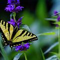 Butterfly On A Purple Flower by Belinda Greb