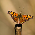 Butterfly On A Stick by Randall Ingalls