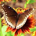 Butterfly On A Sunset by Sydney Thompson
